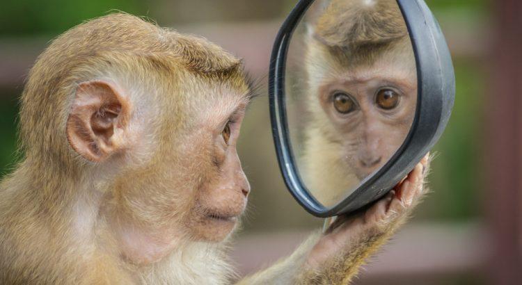 Neurônios-espelho após um quarto de século: nova luz, novas dúvidas